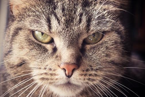 cat-1937001_960_720.jpg